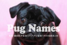 パグに似合う犬の名前